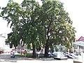 Pushkinska Natural monument (18.08.17).jpg