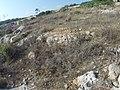 Qrendi, Malta - panoramio (123).jpg