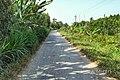 Quới Thiện, Vũng Liêm, Vĩnh Long, Vietnam - panoramio (125).jpg