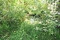 Réserve naturelle Marais Lavours Aignoz Ceyzérieu 32.jpg