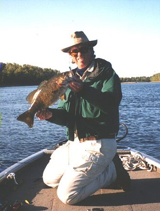 Smallmouth bass - Smallmouth bass from the Rainy River near International Falls, Minnesota (Released)