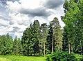 Ramensky District, Moscow Oblast, Russia - panoramio - Andris Malygin (7).jpg