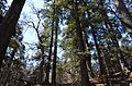 Rara national park 125.jpg