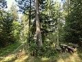 Rastplatz am Naturerlebnispfad Rußweiher 2 - panoramio.jpg