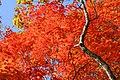 Red carpet in the sky. - Flickr - skyseeker.jpg