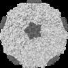 Rhinovirus.PNG