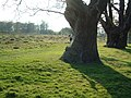 Richmond Park (near Bog Lodge) - geograph.org.uk - 1664.jpg