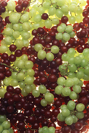 Ripe table grapes