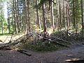 Ristimägi, 2011, regnr 22282.jpg