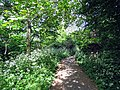 River Ching footpath 05, South Chingford, Waltham Forest, London, England.jpg