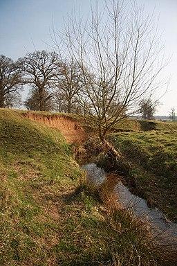 River Linnet in Ickworth Park - geograph.org.uk - 1220051