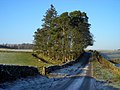 Roadside Trees Near Midtown - geograph.org.uk - 638655.jpg