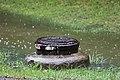 Roman Forest Flood - 4-18-16 (26419455142).jpg