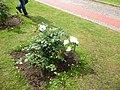 Roseto-di-roma-capitale---sito-di--il-cimitero-ebraico--dal-1645-fino-al-1934 9005796993 o 45.jpg