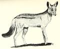 Rosevear side striped jackal.png