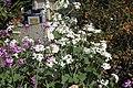 Rouen fleur place de la gare 2.JPG