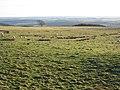 Rough pastures west of Carrawbrough Farm (2) - geograph.org.uk - 1108305.jpg