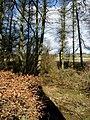Rough woodland near Parkhill - geograph.org.uk - 350644.jpg