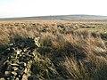 Ruined dry stone wall on Burnhead Moss - geograph.org.uk - 714868.jpg