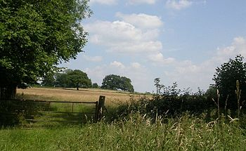 English: Rural Surrey. Fields near Dunsfold in...