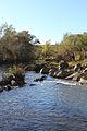 Săsar river 03.JPG