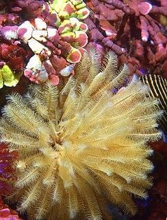 Carmel Bay State Marine Conservation Area
