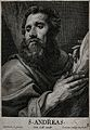 Saint Andrew. Line engraving by C. van Caukercken after Sir Wellcome V0031540.jpg