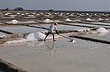 Salt Pans of Marakkanam.jpg