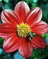 """San Francisco - Golden Gate Park """"Conservatory Of Flowers - Yellow on Red"""" (1846504204).jpg"""
