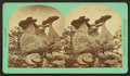 Sandstone rock formations, by Chamberlain, W. G. (William Gunnison) 2.png