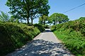 Sarn Helen, near Pentrebannau - geograph.org.uk - 800017.jpg