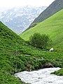 Scenery outside Juta - Sno Valley - Greater Caucasus - Georgia - 04 (18641724981) (2).jpg