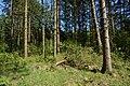 Schleswig-Holstein, Fockbek, Naturschutzgebiet Fockbeker Moor NIK 1616.jpg