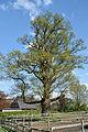 Schleswig-Holstein, Neuendeich, Naturdenkmal 35-01 NIK 2983.JPG