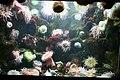 Sea Anemone (2863775585).jpg
