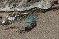 Sea anemone (42412118394).jpg