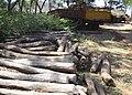 Seized Pterocarpus santalinus Red Sanders logs PIC 0001.jpg