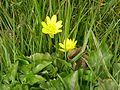 Ser Frugal flores de primadvera muno - panoramio.jpg
