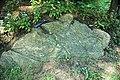 Serpentinite (East Dover Ultramafic Body, Ordovician; roadcut southwest of East Dover, Vermont, USA) 1.jpg