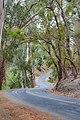 Shady Pathway (43424892).jpeg