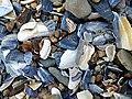 Shell Fragments - geograph.org.uk - 1392504.jpg