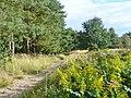 Siedlung Falkenhoehe - Wanderweg (Rural Footpath) - geo.hlipp.de - 42474.jpg