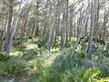 Sierra de Irta en Santa Magdalena de Pulpis 01.JPG