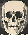 Skull art detail, Staking brengt alleen ellende (cropped).jpg