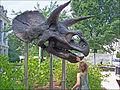 Smithsonian-Triceratops-skull-cast-0006a.jpg