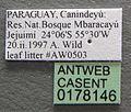 Solenopsis schmalzi casent0178146 label 1.jpg