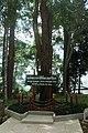 Sorea roxburghii Phra That Si Surat.jpg