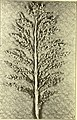 Sorghums - sure money crops (1914) (14776956091).jpg