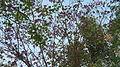 Spring bloom - Flickr - Swami Stream.jpg