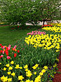 Spring border from tulips 05.JPG